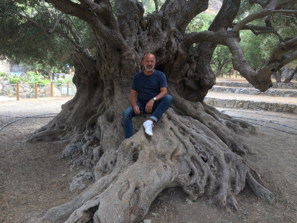 Crete's Oldest Olive Tree | Create Retreats